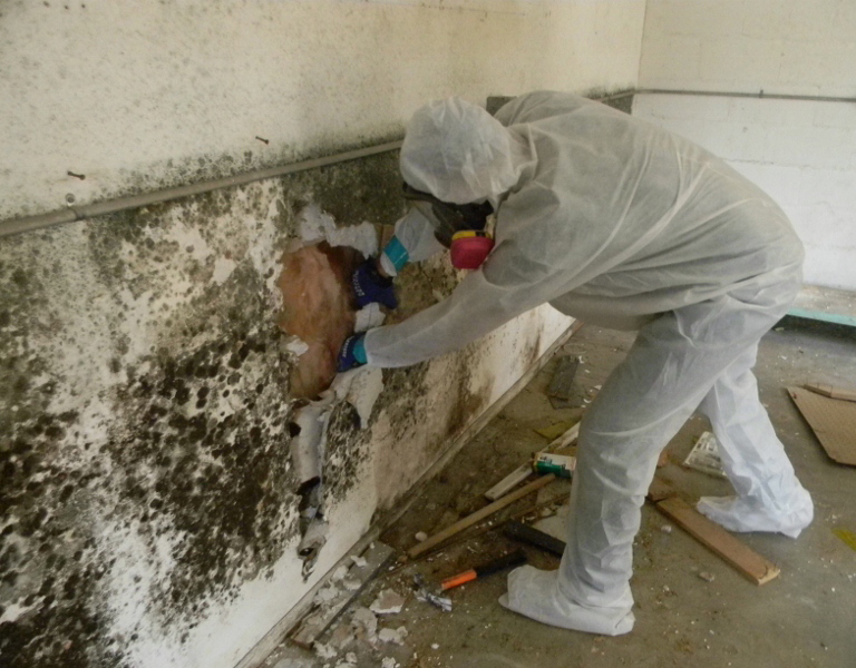 Image result for mold removal